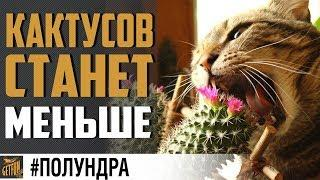 ЧИТЫ И КАКТУСЫ ПОД УДАРОМ #полундра ? World of Warships